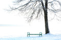 Wood bench under tree the park at winter day Royalty Free Stock Photo