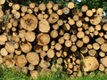 Wood big pile of felled timber Royalty Free Stock Image