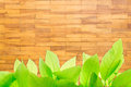 Wood block wall texture green leaves on Royalty Free Stock Images