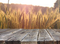 Wood board table in front of field of wheat on sunset light. Ready for product display montages Royalty Free Stock Photo
