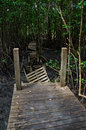 Wood Boardwalks go to mangrove forest, Thailand Royalty Free Stock Photos