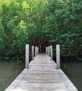 Wood bridge in forest, Chanthaburi,Thailand Royalty Free Stock Photo