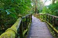 Wood bridge forest nature walks doi inthanon mountain chiang mai thailand Stock Photo