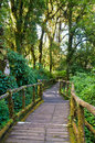 Wood bridge forest nature walks doi inthanon mountain chiang mai thailand Stock Image