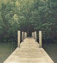Wood bridge in mangrove forest, Chanthaburi,Thailand Royalty Free Stock Photo