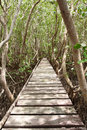 Wood bridge in mangrove forest, middle of Thailand Royalty Free Stock Photo