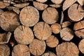 Wood Brown Log