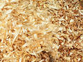Wood chip texture Royalty Free Stock Photo