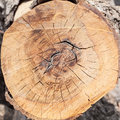Wood circle cross section of tree stump a Stock Images