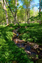Wood creek wild garlic at the Stock Image