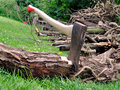 Wood Cutting - Axe Stuck in a Tree Log on Grass Royalty Free Stock Image