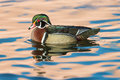 Wood duck on pond Stock Photo