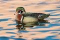 Wood Duck On Pond