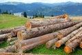 Wood exploitation Royalty Free Stock Photo