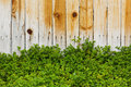 Wood Fence with Plants Royalty Free Stock Photo
