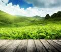 Drevo poschodie na čaj plantáž vysočina