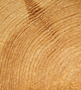 Wood grain Royalty Free Stock Photo