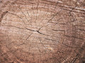 Wood grain texture of old tree stump with cracks in brown tone f Royalty Free Stock Photo