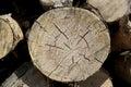 Wood log cut Royalty Free Stock Photo