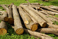 Wood logging logs Royalty Free Stock Photo