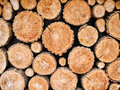 Wood logs background Royalty Free Stock Photo