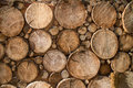 Wood logs background wooden texture of tree Stock Photos