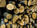 Wood logs beech background filled Royalty Free Stock Images