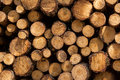 Wood logs in the forest poland Stock Photos