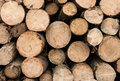 Wood logs pile of ready for winter Royalty Free Stock Photography