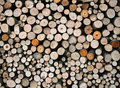 Wood logs pile of ready for winter Royalty Free Stock Image