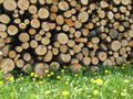 Wood on a meadow the stored at each other in pile Stock Photo
