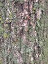 Wood old tree mesh Stock Photos