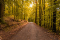 Wood path in the autumn colours Royalty Free Stock Photo
