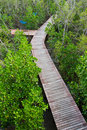 Wood path mangrove forest on top Royalty Free Stock Photos