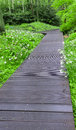 Wood path over  through  forest Royalty Free Stock Photo