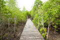 Wood path way among the mangrove forest thailand Stock Image