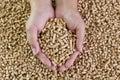 Wood pellets in female hands. Biofuels. Alternative biofuel