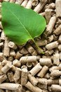 Wood Pellets & Green Leaf Royalty Free Stock Images