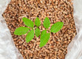 Wood pellets in a sack with tree sapling an open bag of stack of bagged behind green fuel concept Royalty Free Stock Photos