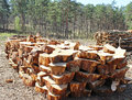 Wood pile freshly cut tree logs piled up Stock Images