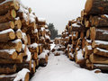 Wood pile in winter forest covered with snow Royalty Free Stock Images