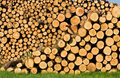 Wood piles Stock Photography