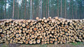 Wood piles Stock Images