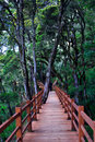 Wood Plank Road Through the forest Royalty Free Stock Image