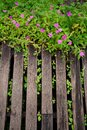 Wood planks with flowers in garden Stock Photos