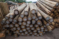 Wood Poles Treated Stock Image