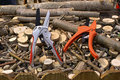 Wood pruners and cut branches many that have been Royalty Free Stock Images