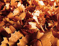 Wood shavings Royaltyfri Foto