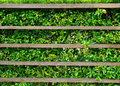 Wood shelf with green leaves background Stock Photo