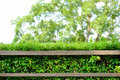 Wood shelf with green leaves background Stock Photography